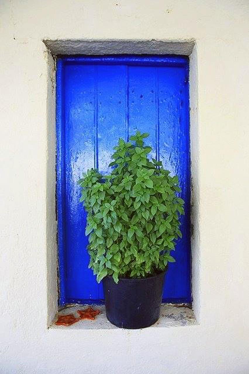Ελλάδα με μυρωδιές από  βασιλικό