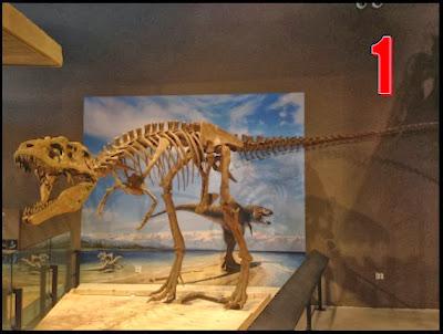 تي ركس,حفريات,ديناصور,منقرض,مفترس,جمجمة,أسنان,طباشيري,2013