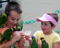 Children feeding paraqueets