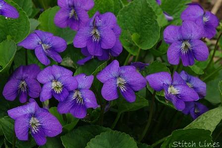 Stitch Lines Wildflower Wednesday