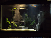 3d Aquarium Backgrounds4