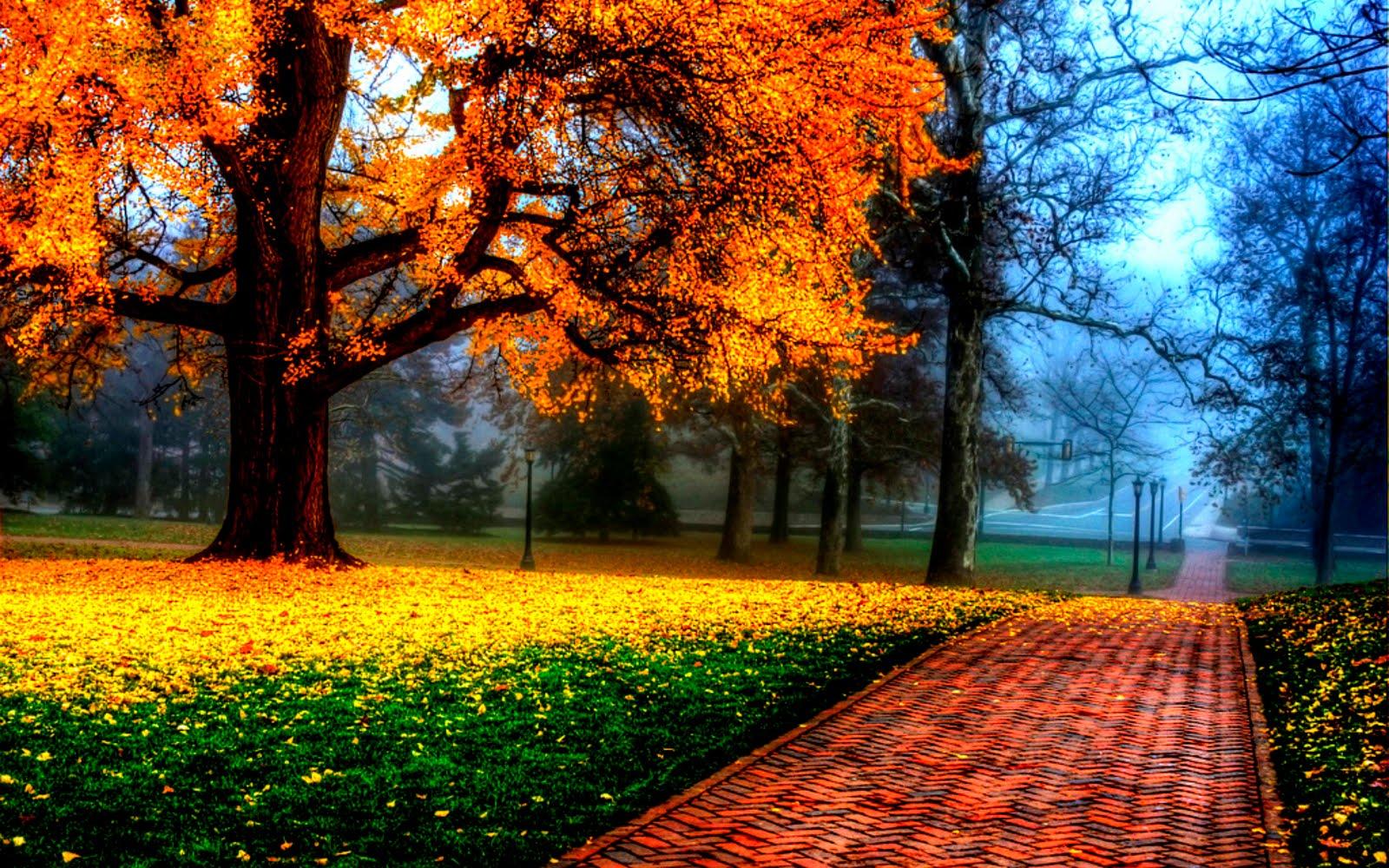 otoño, atumm, hdr