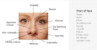 Nose Diagram Nose revision surgery and
