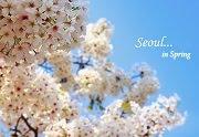 10 สถานที่ชมดอกซากุระบานยอดนิยมในโซล