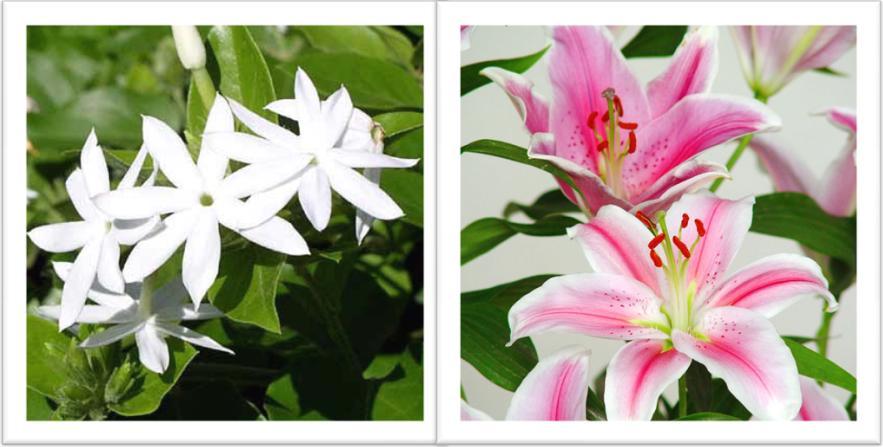 Plantas ornamentales dibujos imagui for Concepto de plantas ornamentales