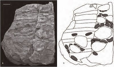 http://sciencythoughts.blogspot.co.uk/2012/02/new-description-of-ankylosaurid.html