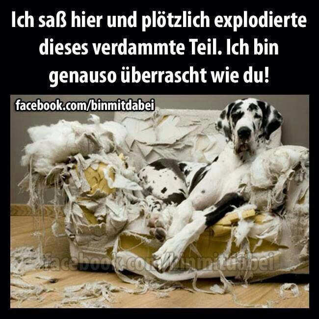 Gassireport Hundeblog Dominieren Durchs Sofa