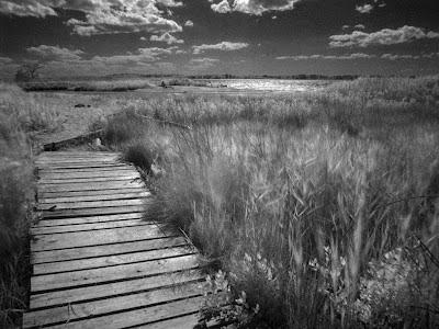 Foto de un paisaje en blanco y negro