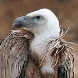 L'Avvoltoio del 27 marzo 2015