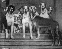 profesora de perros que hablan