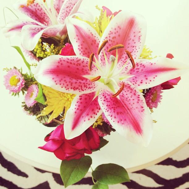 Star Gazers, flowers