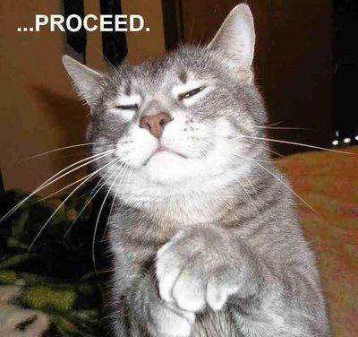 funny cat-33