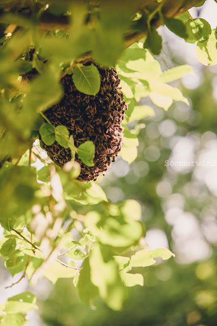 Bienen Notfall