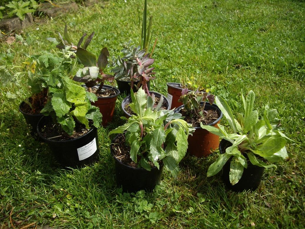 Derri re les murs de mon jardin commande re ue - Derriere les murs de mon jardin ...