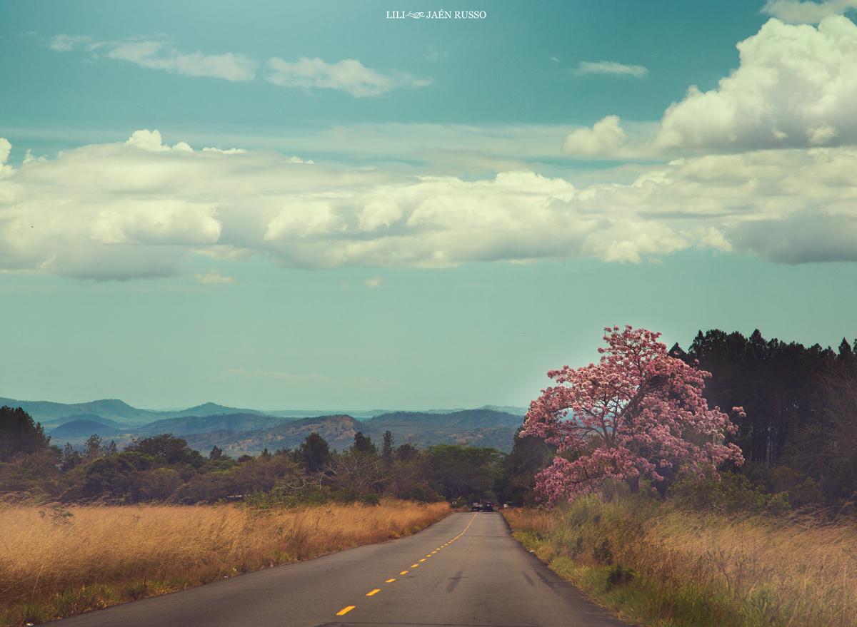 Camino amarillo, Carretera Volcán - Boquete.