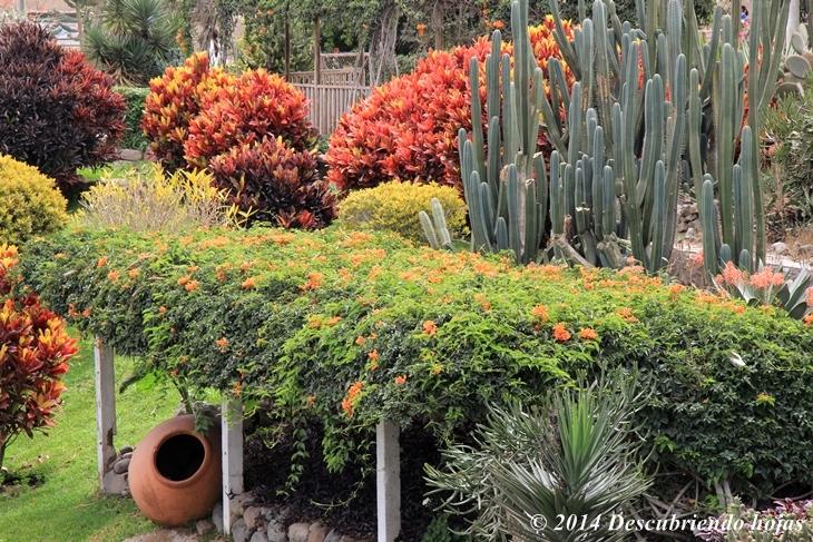 Descubriendo hojas jard n bot nico en el parque de las for Jardin botanico san felipe