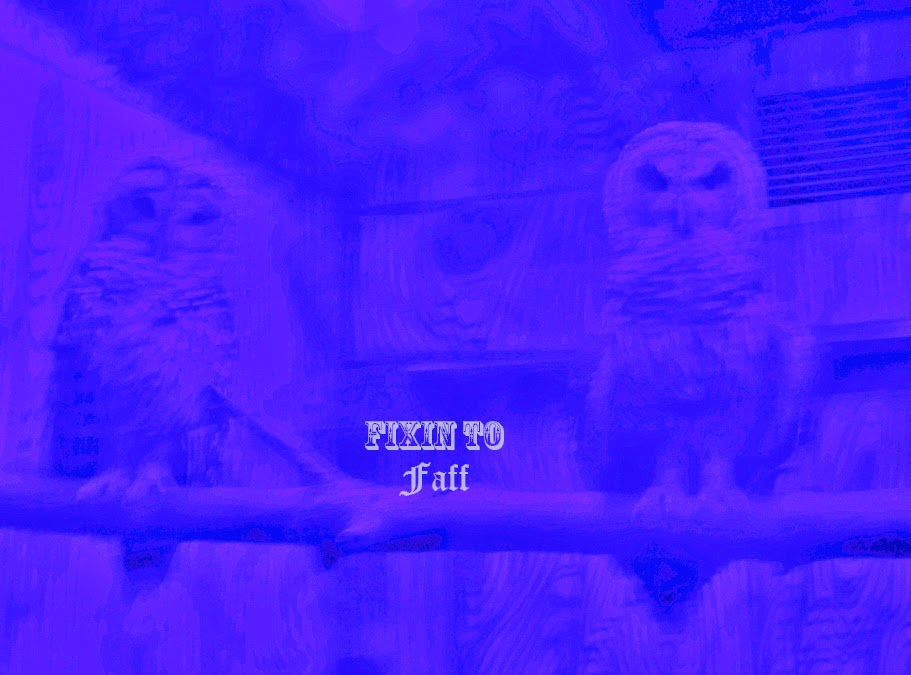 Cameron Park Zoo Barn Owls