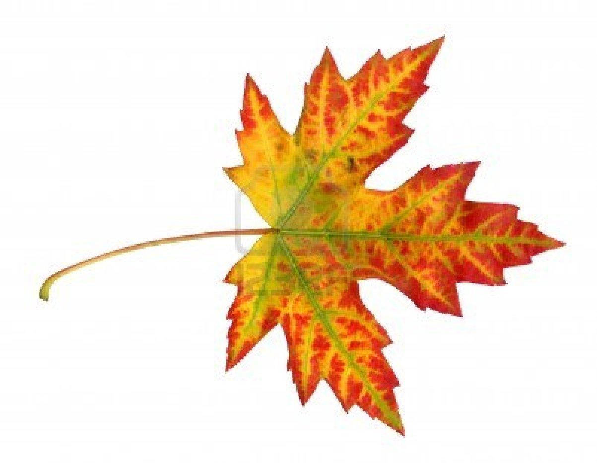 Hojas de Maple en otoño (Fondos para pc y laptop)