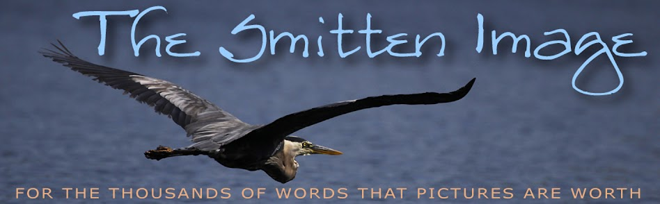 The Smitten Image