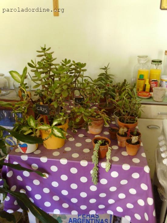 lastanzaverdedicri piante grasse