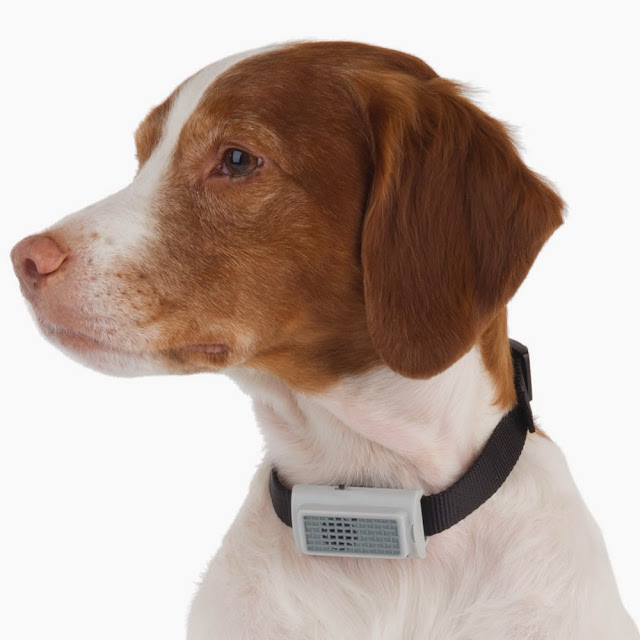 Coolest and Awesome Dog Collars (15) 6