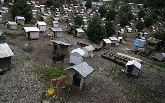 Image Result For Perumahan Subsidi Rumah