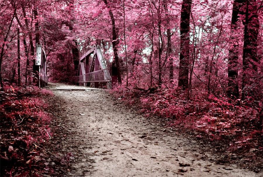 pink wallpaper ireland