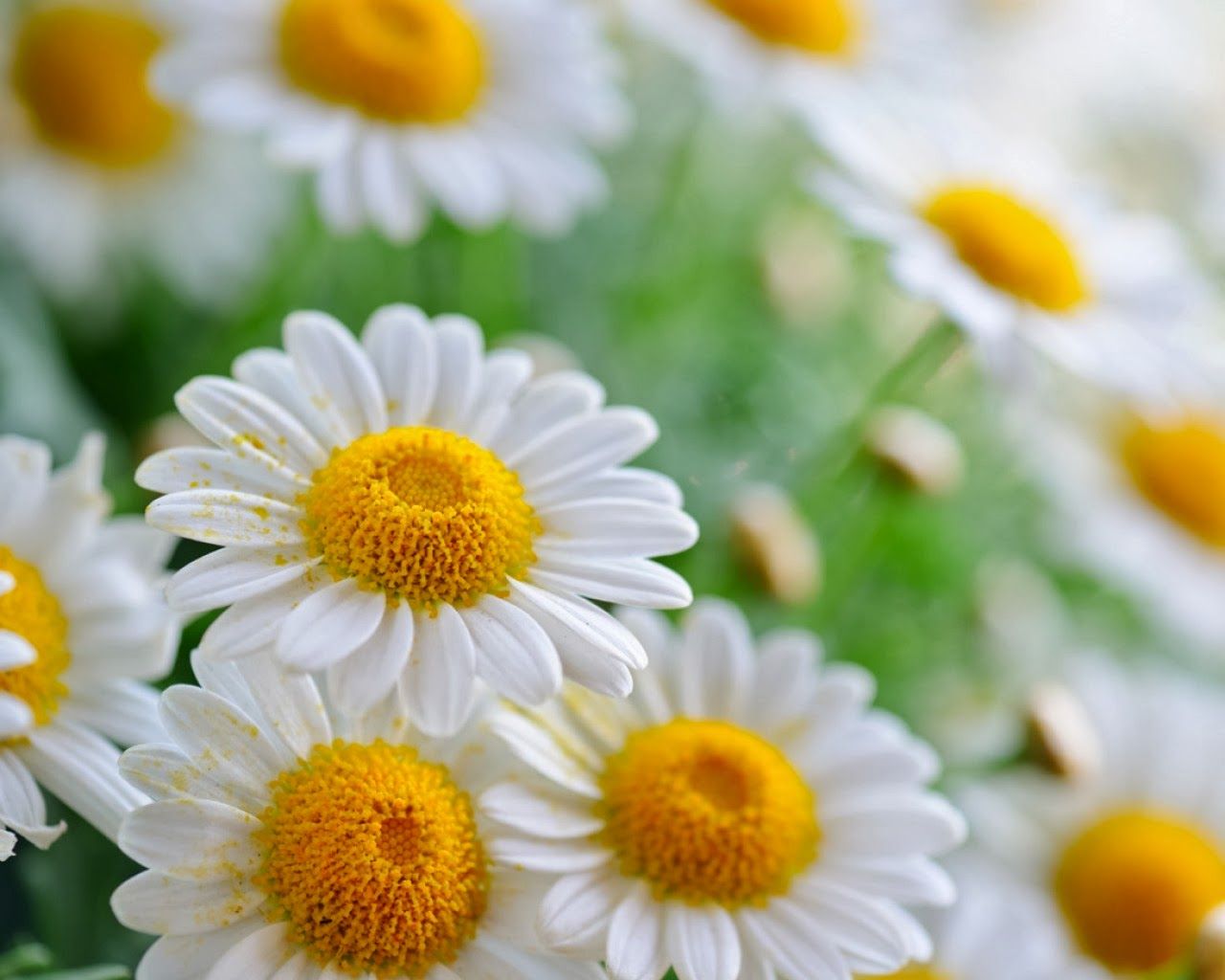 gather flowers wallpapers - photo #4