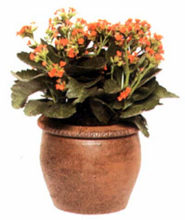 Эхмея полосатая (Aechmea fasciata) культивируется ради изумительного соцветия.