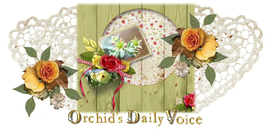 Orchid's Daily Voice (Home Page)