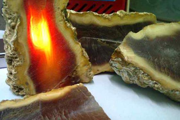 Contoh Bahan Batu Akik Raflesia Kualitas Tinggi