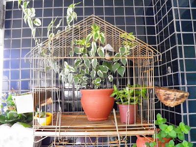 Gaiola decorativa; artesanato; jardinagem; varanda; reciclagem; decoração de varanda e jardim.