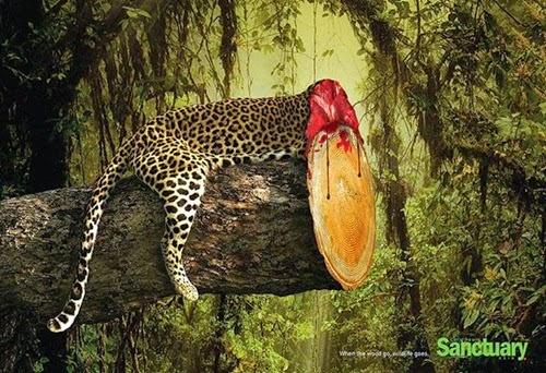 4 Gambar Bermesej Apabila Hutan Musnah, kemusnahan hutan ancam spesies flora dan fauna di hutan, kesan pembalakan haram, penggondolan hutan, penebangan pokok di hutan tanpa kawalan, cheetah, tebang pokok