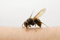 Picadura de avispa o abeja. Consejos y remedios