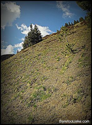 tyler peak trail