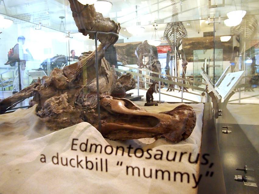 dinosaur mummy