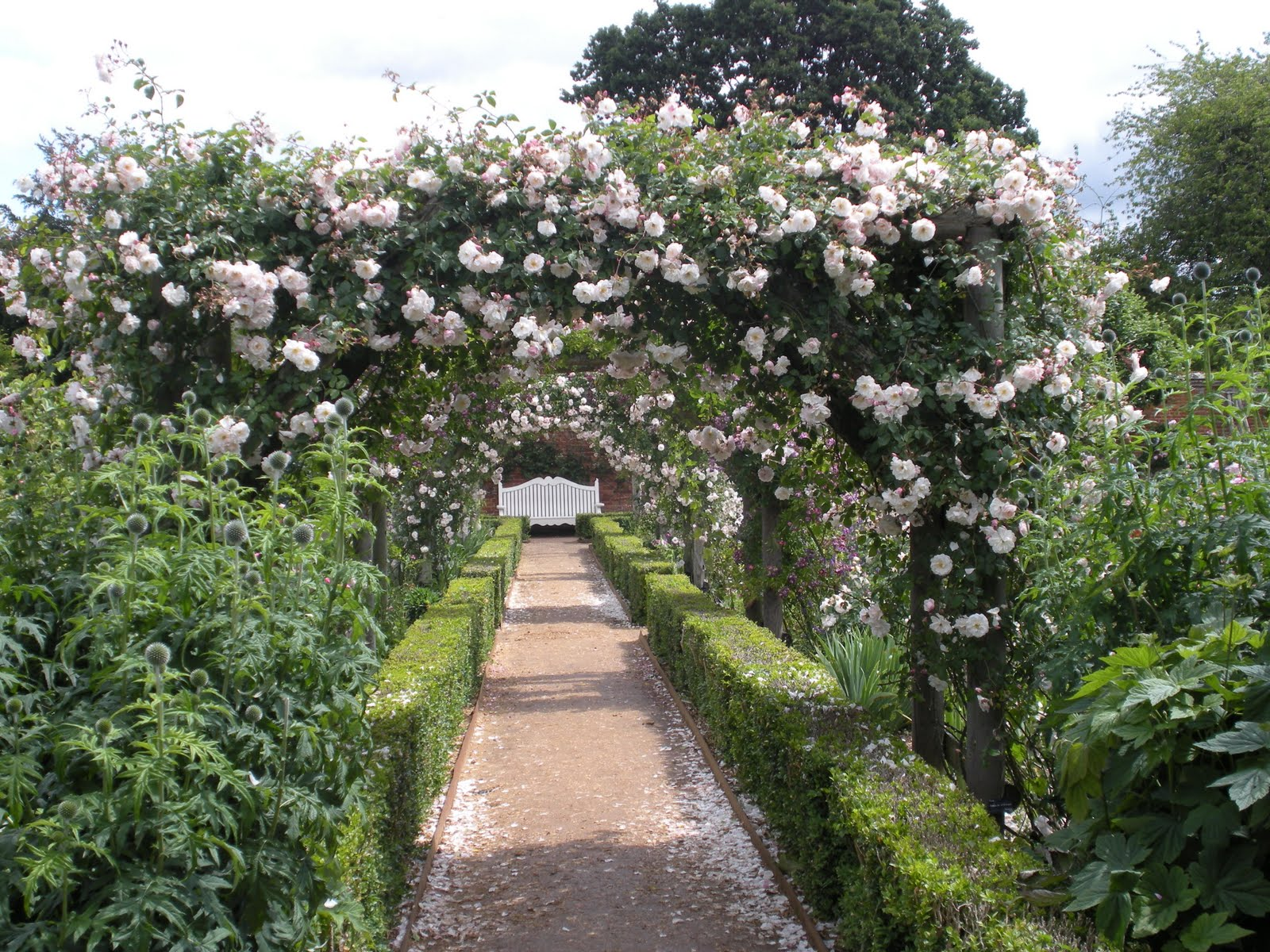 Victoria39s backyard the rose gardens at mottisfont abbey for Backyard rose garden