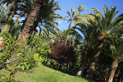 Palms in a park of Elche