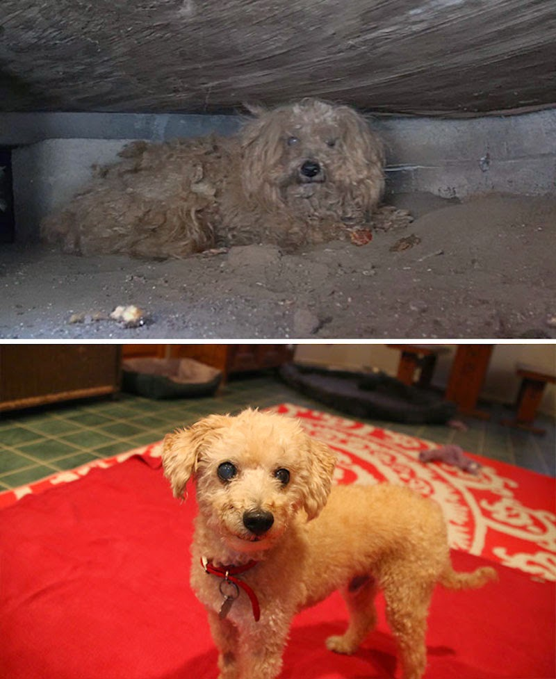 Woody - 16 Before-and-After Photos Of Rescued Dogs