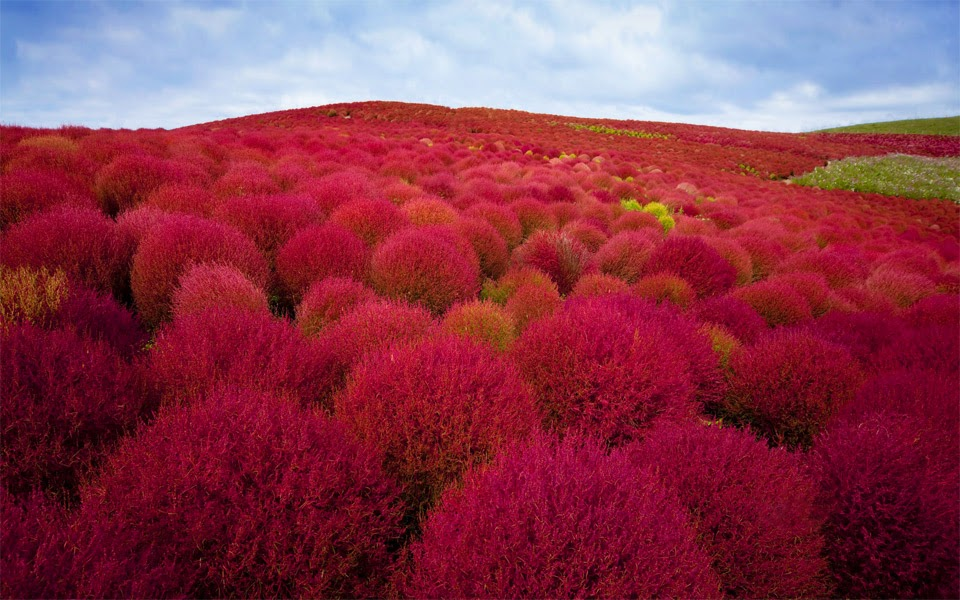 Burning Bush Plants Park Japan Angelic Hugs
