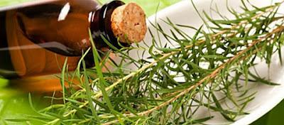 Tinh dầu tràm trà nguyên chất trị mụn dưỡng da hiệu quả
