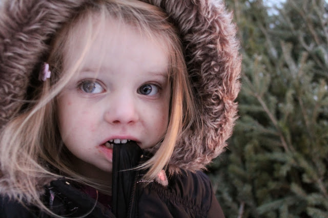 Edmonton Christmas Tree Lot