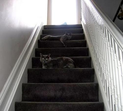 Ninja Pets - Cães e Gatos mestres na camuflagem