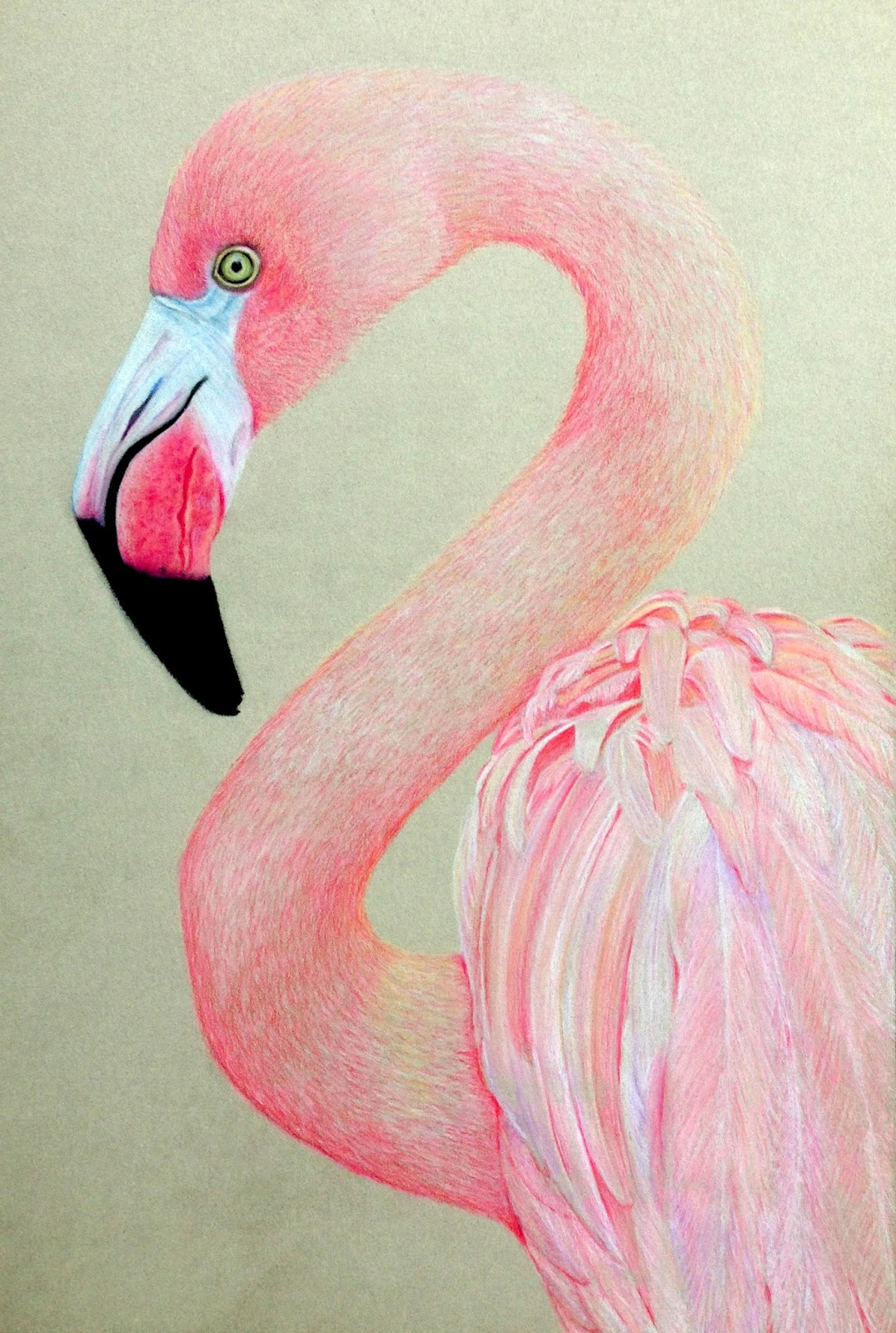 Artful evidence coloured pencil sketch pink flamingo for Flamingo feather paint