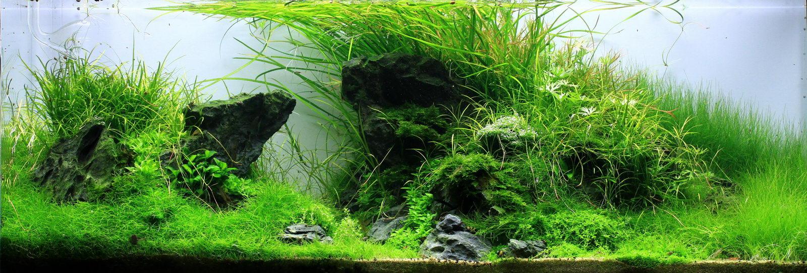 Aquascape aliran diy bagaimana cara membuat aquascape profesional dengan dana seadanya - Gambar aquascape ...