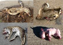 Constamment sur notre chemin, nous voyions des animaux tué par la circulation
