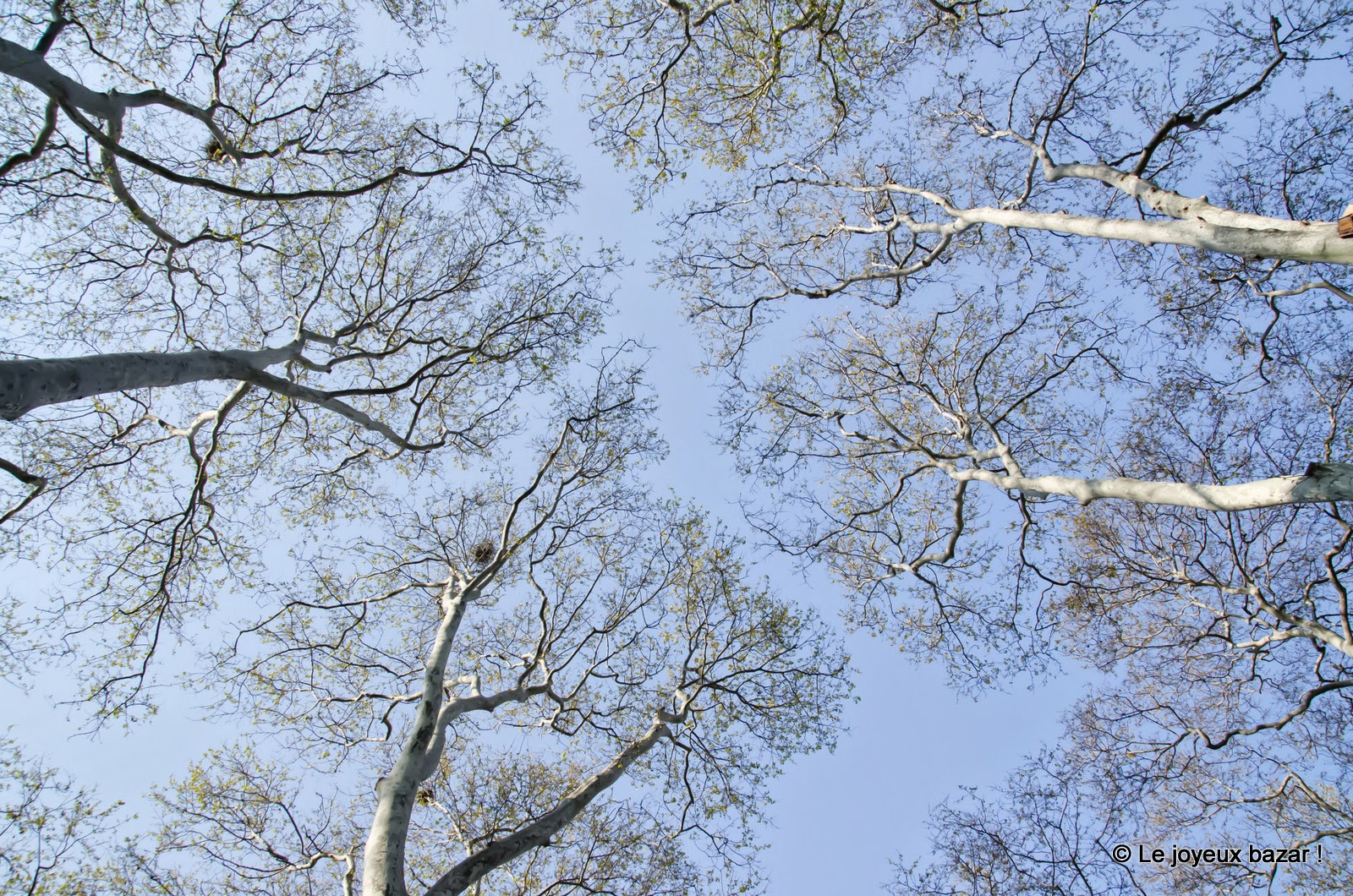 Istanbul - Parc de Gülhane - arbres