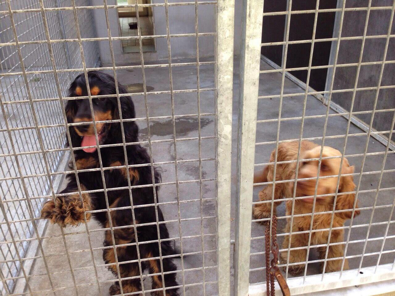 Hunde%2BIMG 20140927 WA0001