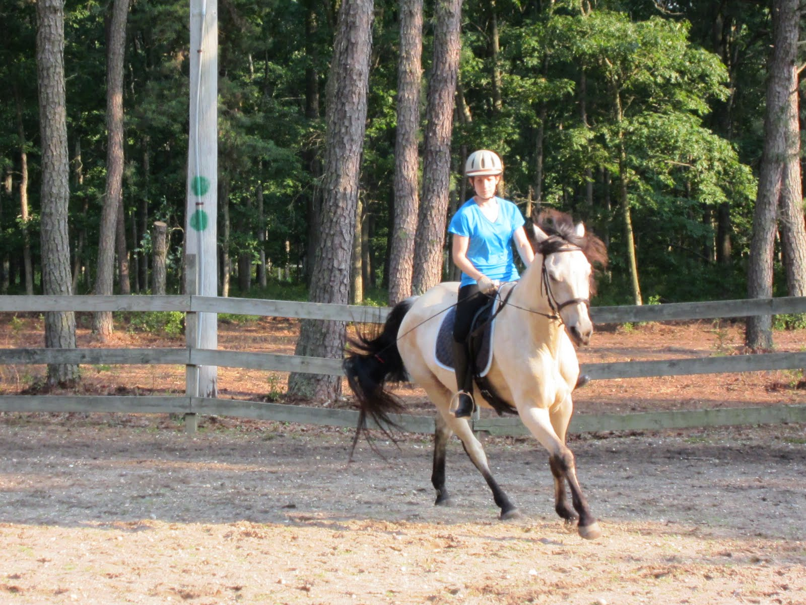 how to ride the canter