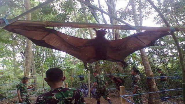 Giant Bat Captured by Military